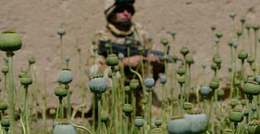 afghanpoppies372.jpg