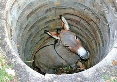 donkey-in-a-well